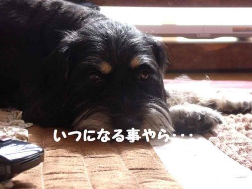 2010_0320_195843-DSCF3014.JPG